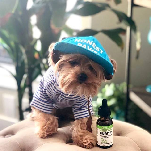 CBD Oil for Dogs, Cats, and all Animals  CBD Oils, Treats